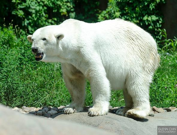 20130628_Philadelphia Zoo_293-Edit