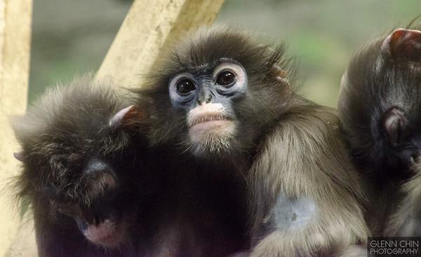 20130628_Philadelphia Zoo_74