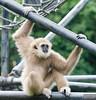 20130628_Philadelphia Zoo_102-Edit