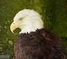 20130628_Philadelphia Zoo_240-Edit