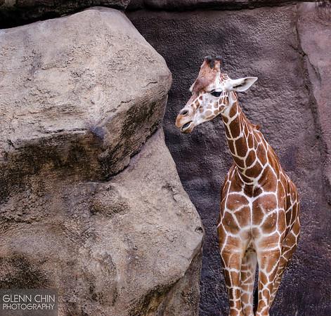 20130628_Philadelphia Zoo_364-Edit