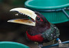 20130628_Philadelphia Zoo_169-Edit