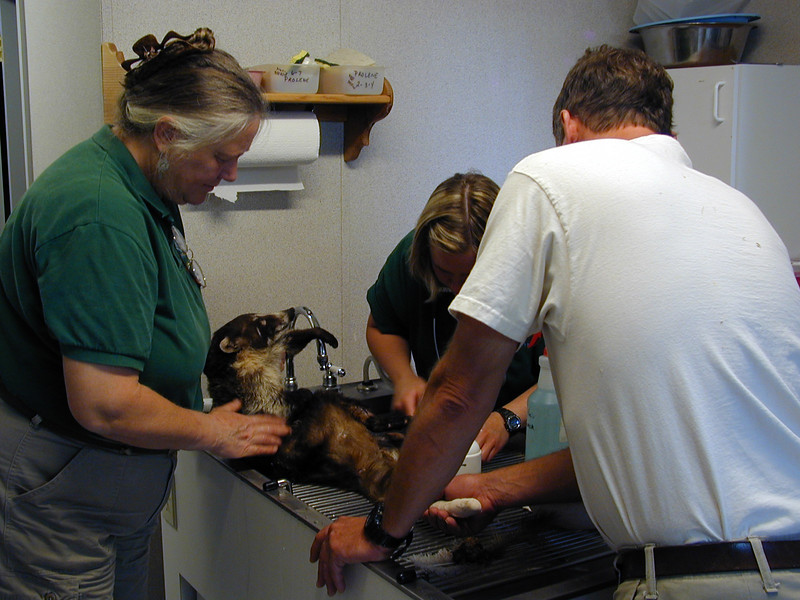 Zoo Vets at Work