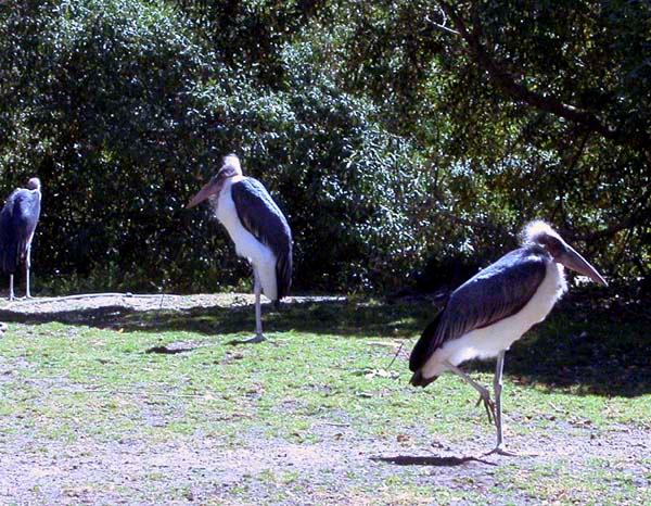 Birds1 copy