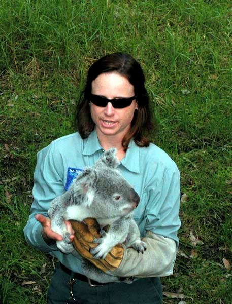 Koala1 copy