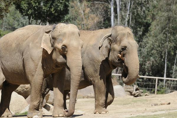 San Diego Wild Animal Park, 04/10/08