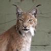 Cat Survival Trust 07-08-10  010