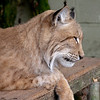Cat Survival Trust 07-08-10  004