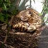 Cat Survival Trust 07-08-10  015