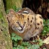 Cat Survival Trust 07-08-10  020