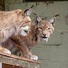 Cat Survival Trust 07-08-10  012