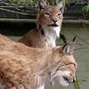 Cat Survival Trust 07-08-10  011