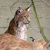 Cat Survival Trust 07-08-10  014