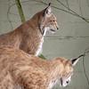 Cat Survival Trust 07-08-10  008