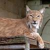 Cat Survival Trust 07-08-10  005