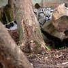 Cat Survival Trust 07-08-10  002