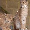 Cat Survival Trust 07-08-10  017