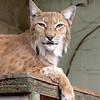 Cat Survival Trust 07-08-10  006