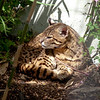 Cat Survival Trust 07-08-10  016