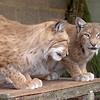 Cat Survival Trust 07-08-10  013