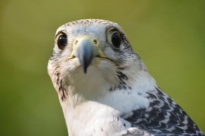 VA Raptor Conservancy