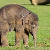 Whipsnade Zoo 01-11-14  016