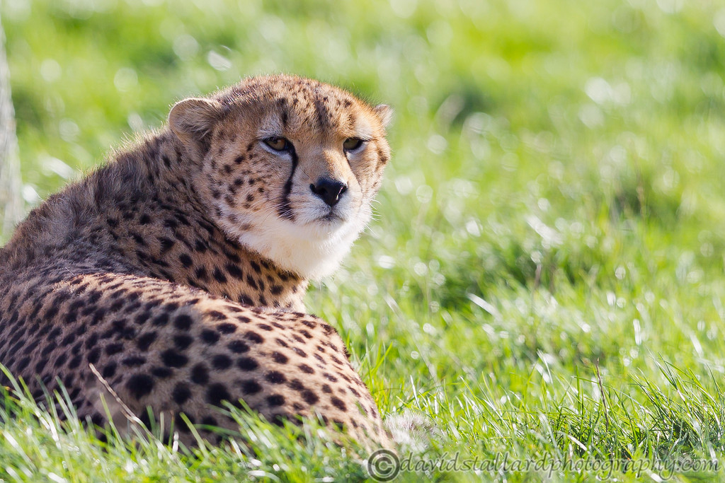 IMAGE: http://www.davidstallardphotography.com/Animals/Zoos/Whipsnade-Zoo-Collection/Whipsnade-Zoo-01-11-14/i-BQX3sVC/0/XL/Whipsnade%20Zoo%2001-11-14%20%20051-XL.jpg