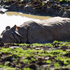 Whipsnade Zoo 01-11-14  017