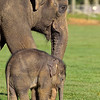 Whipsnade Zoo 01-11-14  012