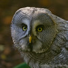 Whipsnade Zoo 01-11-14  001