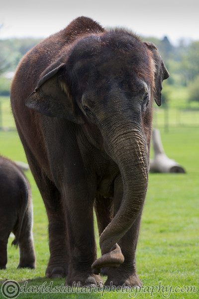 Whipsnade Zoo 03-05-14  019
