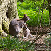 Whipsnade Zoo 03-05-14  004