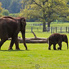 Whipsnade Zoo 03-05-14  014
