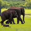 Whipsnade Zoo 03-05-14  017