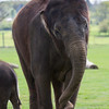 Whipsnade Zoo 03-05-14  018