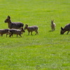 Whipsnade Zoo 03-05-14  020