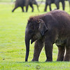 Whipsnade Zoo 03-05-14  016