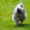 Whipsnade Zoo 03-05-14  009
