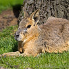 Whipsnade Zoo 03-05-14  013