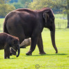 Whipsnade Zoo 03-05-14  015