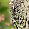 Whipsnade Zoo 03-05-14  005