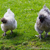 Whipsnade Zoo 03-05-14  011