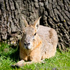 Whipsnade Zoo 03-05-14  012