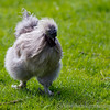 Whipsnade Zoo 03-05-14  010