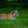 Whipsnade Zoo 09-10-10  007