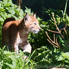 Whipsnade Zoo 18-08-12  005