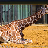 Whipsnade Zoo 18-08-12  014