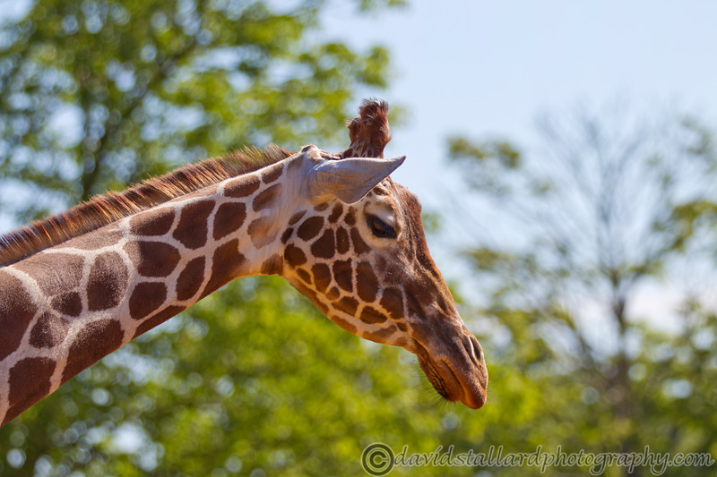 Whipsnade Zoo 18-08-12  012