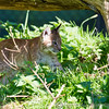 Whipsnade Zoo 18-08-12  003