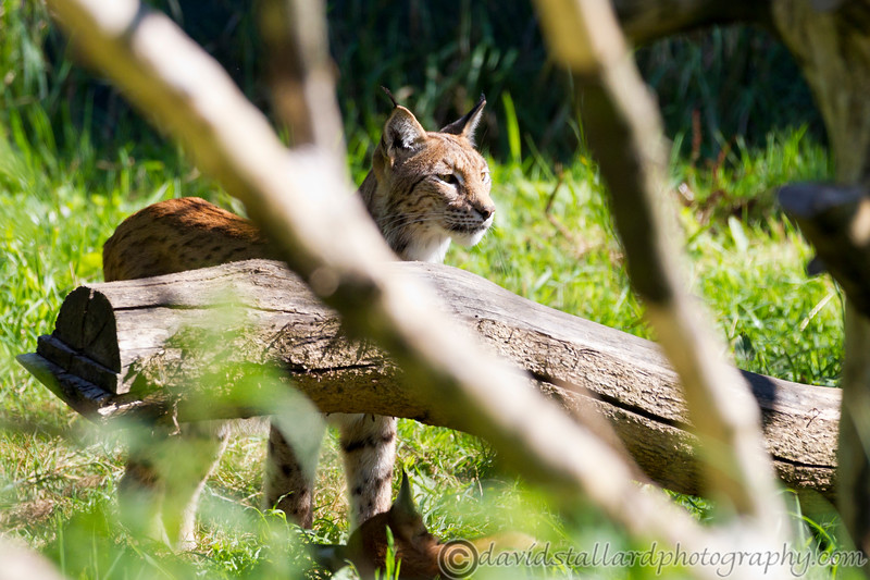 Whipsnade Zoo 18-08-12  001